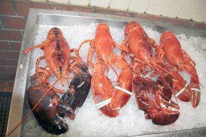 Jordon Lobster Farms